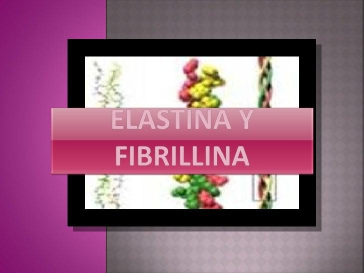  Son fibras muy                              Las estructura característica insolubles que sufren         de la elastina ...
