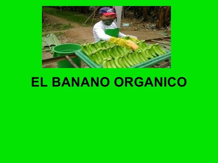 El Banano Organico