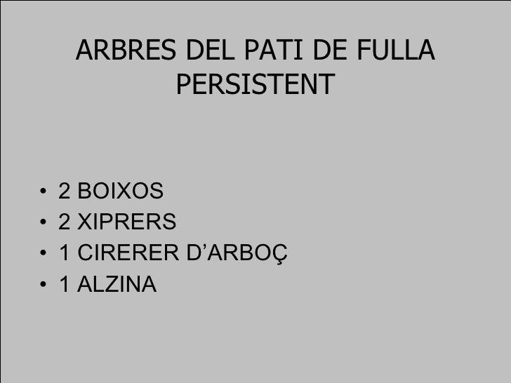 ARBRES DEL PATI DE FULLA PERSISTENT <ul><li>2 BOIXOS </li></ul><ul><li>2 XIPRERS </li></ul><ul><li>1 CIRERER D'ARBOÇ </li>...