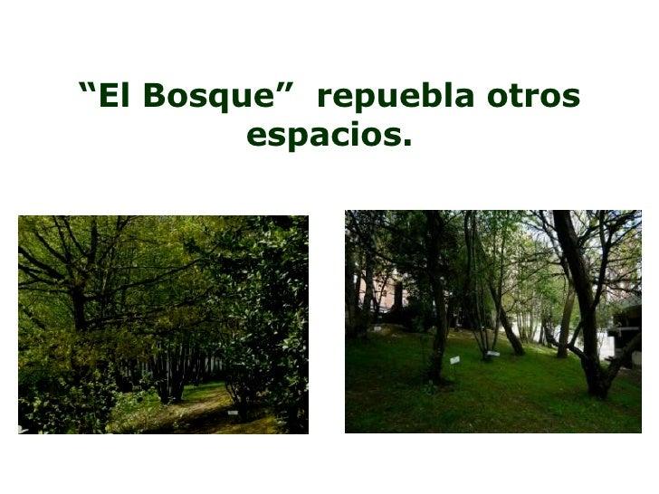 """"""" El Bosque""""  repuebla otros espacios."""