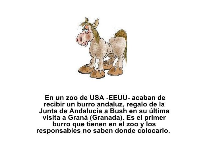 En un zoo de USA -EEUU- acaban de recibir un burro andaluz, regalo de la Junta de Andalucía a Bush en su última visita a...