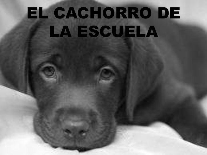 EL CACHORRO DE  LA ESCUELA