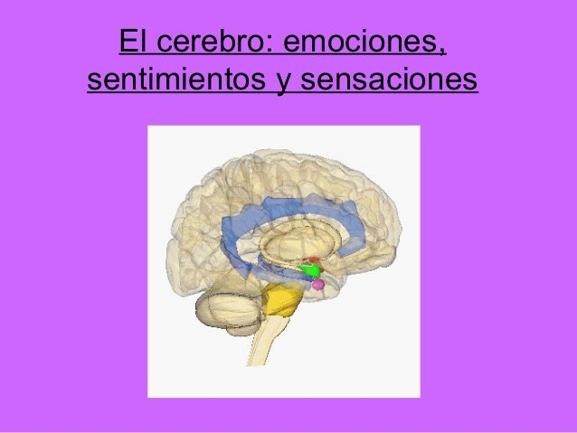 El cerebro: emociones,sentimientos y sensaciones