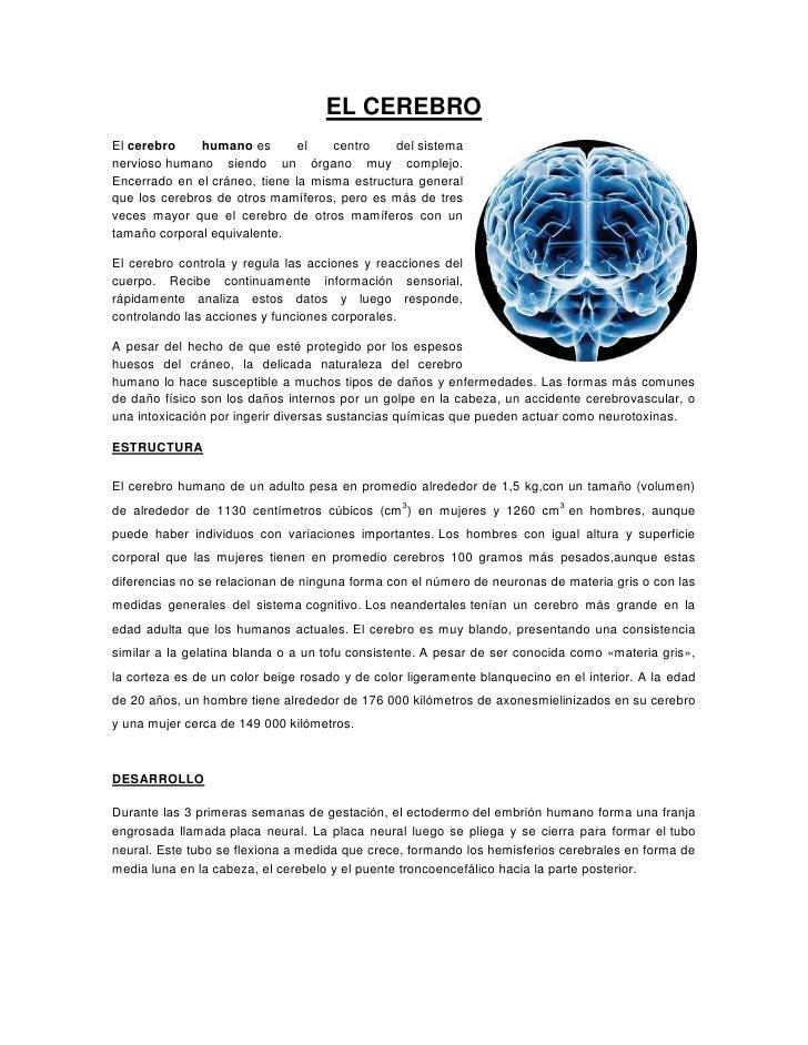 EL CEREBROEl cerebro    humano es        el   centro    del sistemanervioso humano siendo un órgano muy complejo.Encerrado...