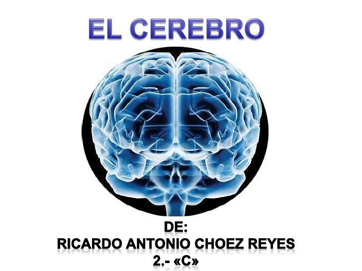 Hemisferios cerebralesHemisferio                    Hemisferio  izquierdo                     derecho