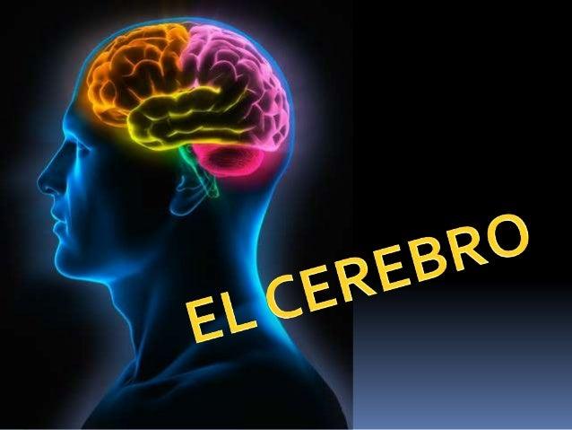 El cerebro y mas