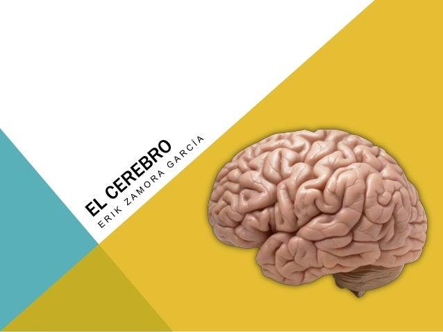 EL CEREBRO Y SUS PARTES El cerebro es uno de los órganos más vitales del cuerpo. Controla y regula las funciones corporale...