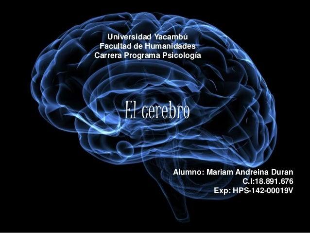 Universidad Yacambú Facultad de Humanidades Carrera Programa Psicología El cerebro Alumno: Mariam Andreina Duran C.I:18.89...