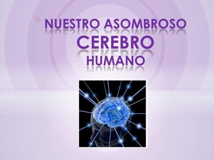 * NUESTRO ASOMBROSO     CEREBRO      HUMANO