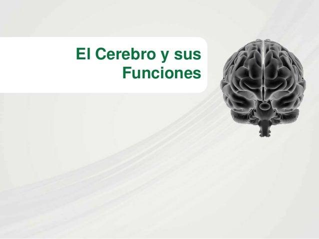 El Cerebro y sus Funciones