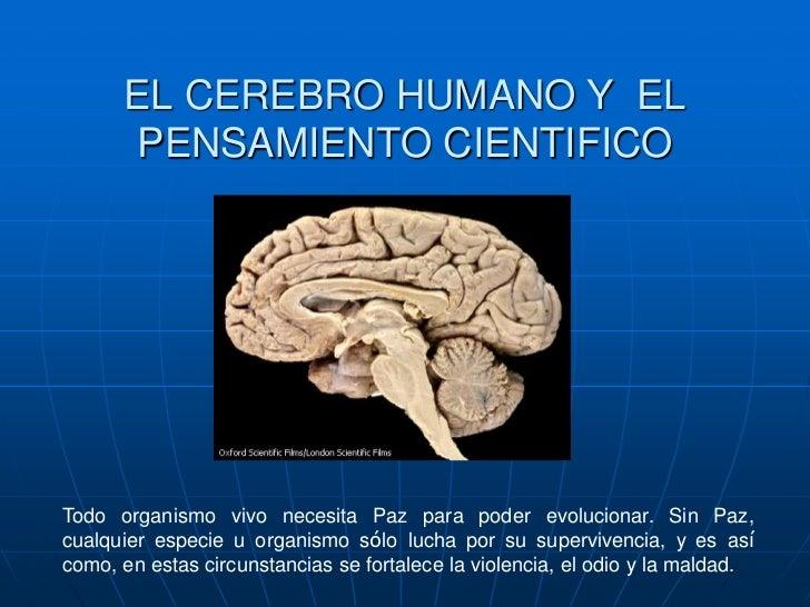 EL CEREBRO HUMANO Y EL       PENSAMIENTO CIENTIFICOTodo organismo vivo necesita Paz para poder evolucionar. Sin Paz,cualqu...