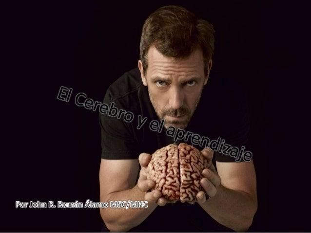 Datos sobre el cerebro  • Pesa aproximadamente 5 libras o  el 2% del peso corporal  • El cerebro consume 20% de  calorías ...