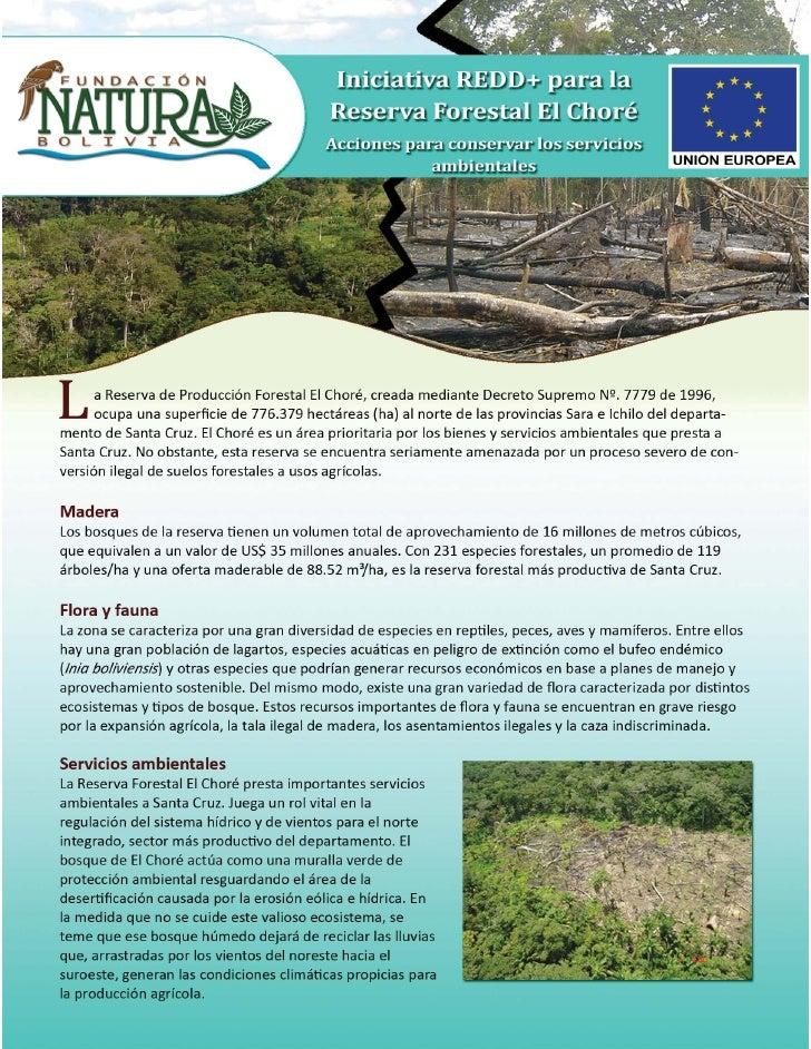 Reserva Forestal El Choré