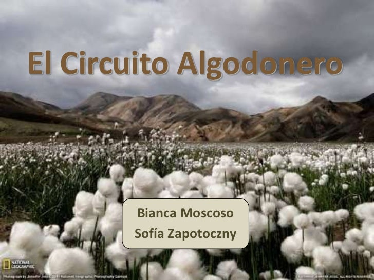 El circuito algodonero