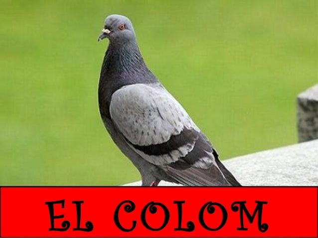 EL COLOM