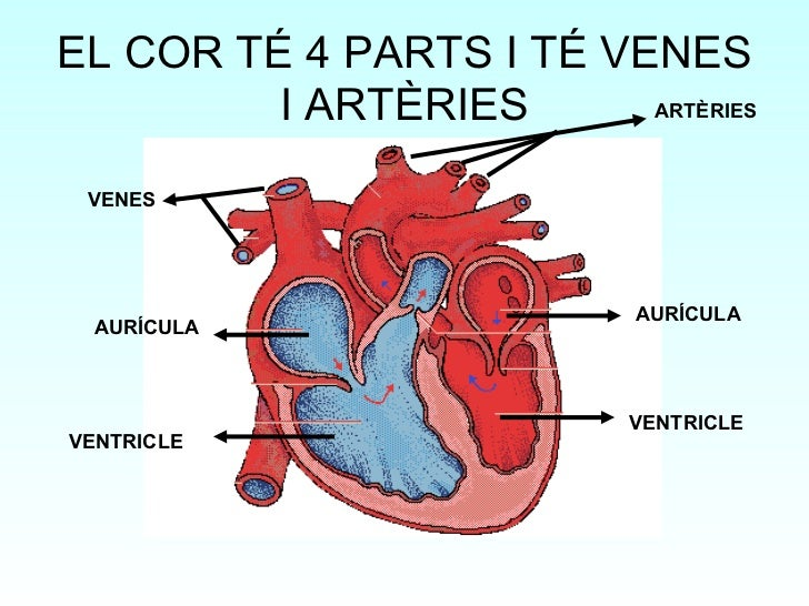 http://wikisaber.es/Contenidos/LObjects/heart_structure/index.html