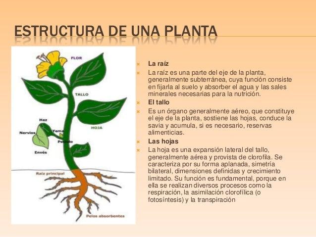 El crecimiento de una planta y los factores en su crecimiento for Estructuras para viveros plantas