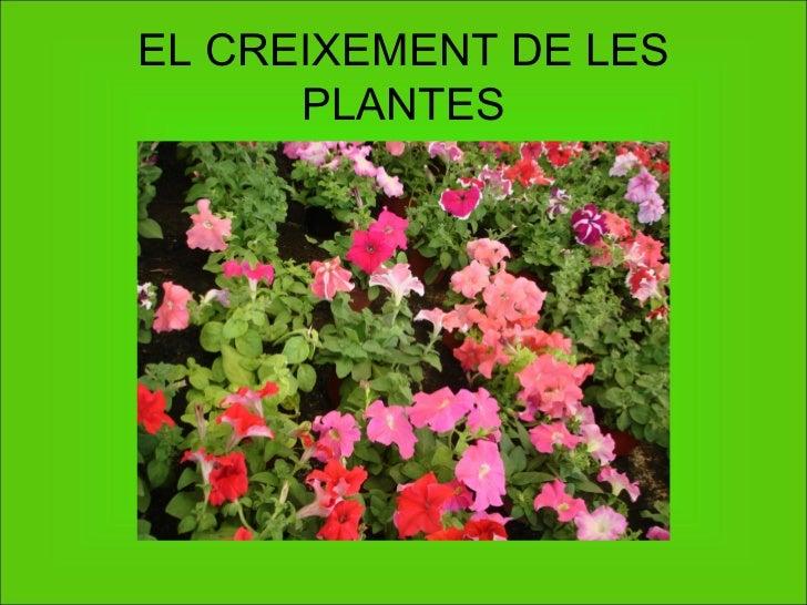 EL CREIXEMENT DE LES PLANTES
