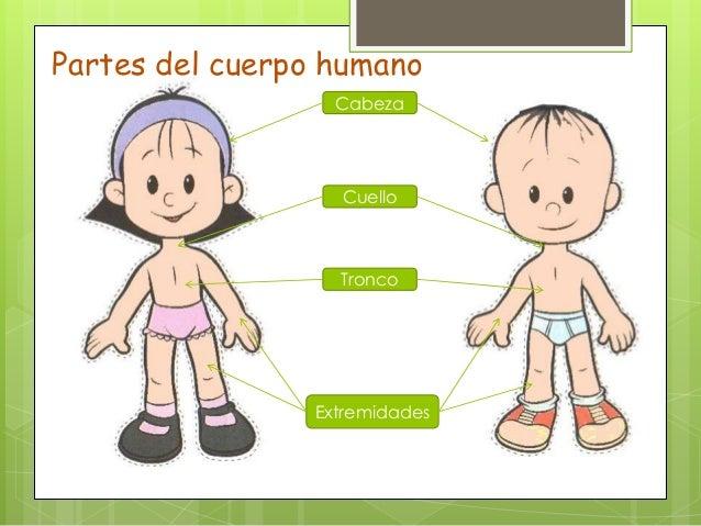 La Partes del Cuerpo Humano: El Cuerpo Humano