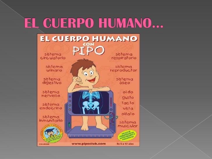 EL CUERPO HUMANO…<br />