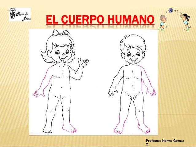 EL CUERPO HUMANO Profesora Norma Gómez T.