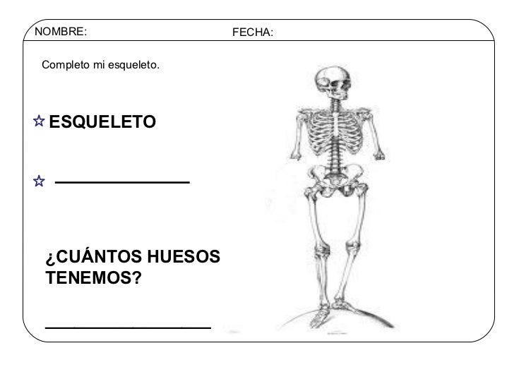 NOMBRE: FECHA: Completo mi esqueleto. ESQUELETO ¿CUÁNTOS HUESOS TENEMOS?  _________________