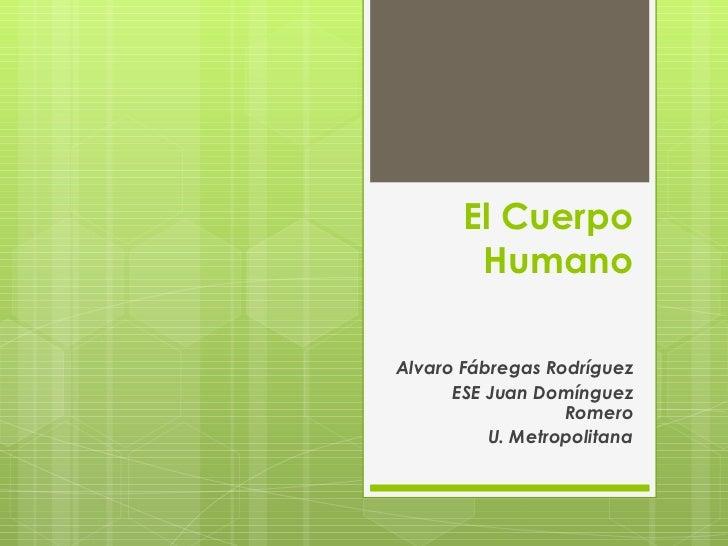 El Cuerpo Humano Alvaro Fábregas Rodríguez ESE Juan Domínguez Romero U. Metropolitana