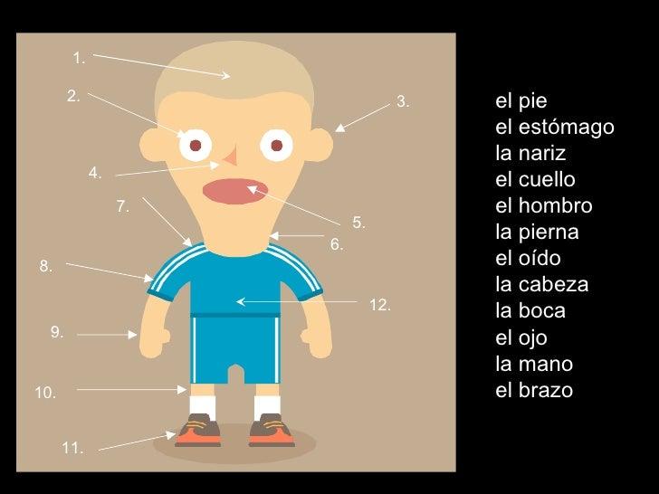 el pie el estómago la nariz el cuello el hombro la pierna el oído la cabeza la boca el ojo la mano el brazo 1. 2. 3. 4. 5....