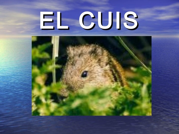 EL CUIS