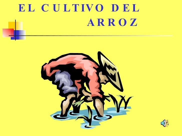 EL CULTIVO DEL   ARROZ