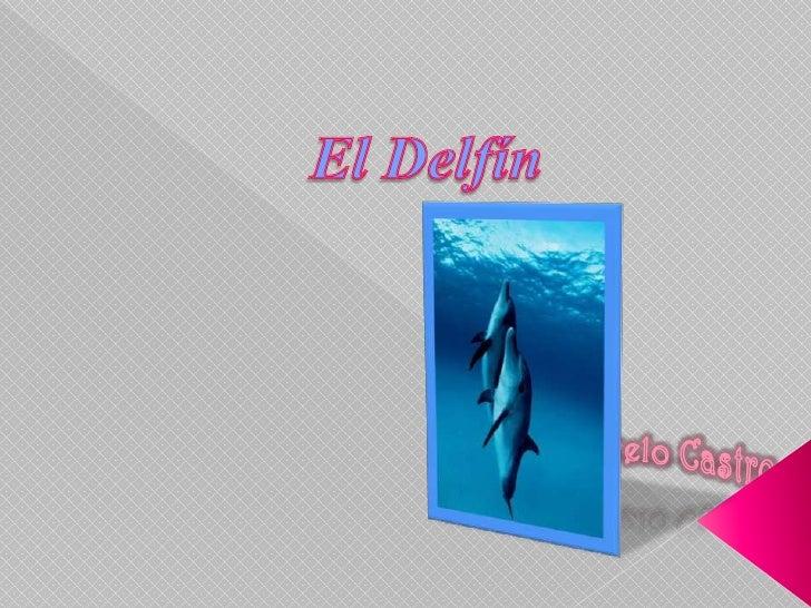 Introducción     Reproducción Especies de      Vocalización e Delfín           Inteligencia Alimentación     Imágenes en C...