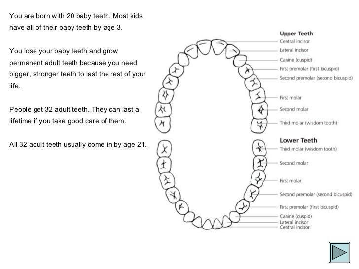 You are born with 20 baby teeth. Most kids have all of their baby teeth by age 3.  You lose your baby teeth and grow perma...