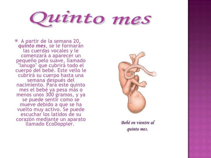 Desarrollo del beb en el quinto mes del embarazo el for Cuarto quinto y sexto mes de embarazo