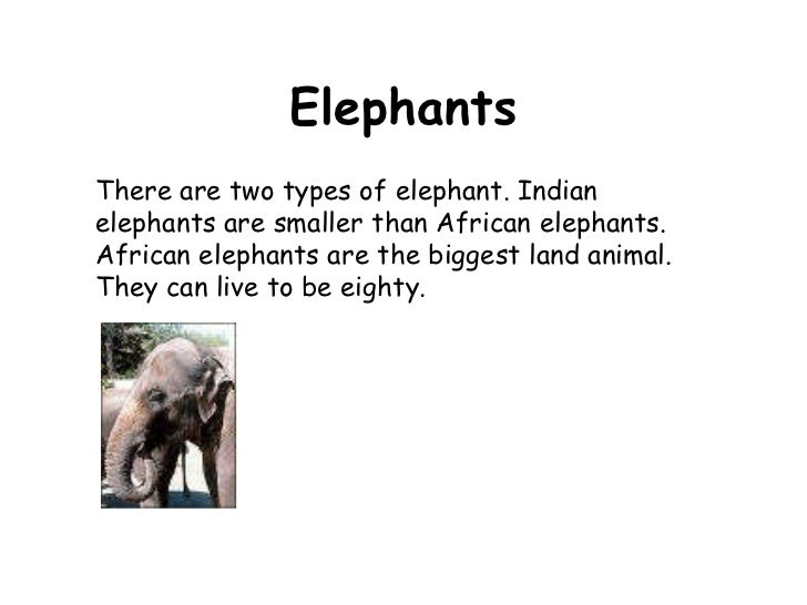 Elephants There are two types of elephant. Indian elephants are smaller than African elephants.  African elephants are the...