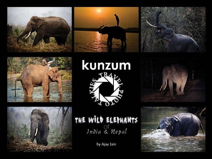 The Wild Elephants of India & Nepal