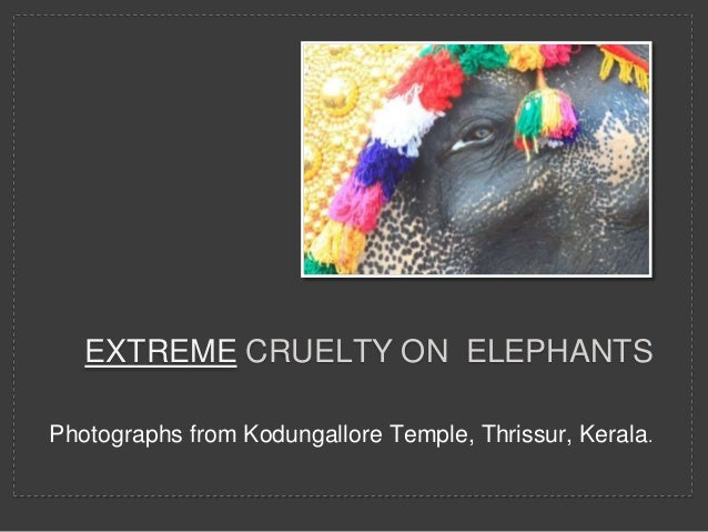 EXTREME CRUELTY ON ELEPHANTS Photographs from Kodungallore Temple, Thrissur, Kerala.