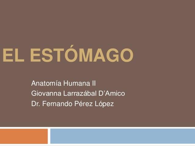 EL ESTÓMAGO  Anatomía Humana II  Giovanna Larrazábal D'Amico  Dr. Fernando Pérez López