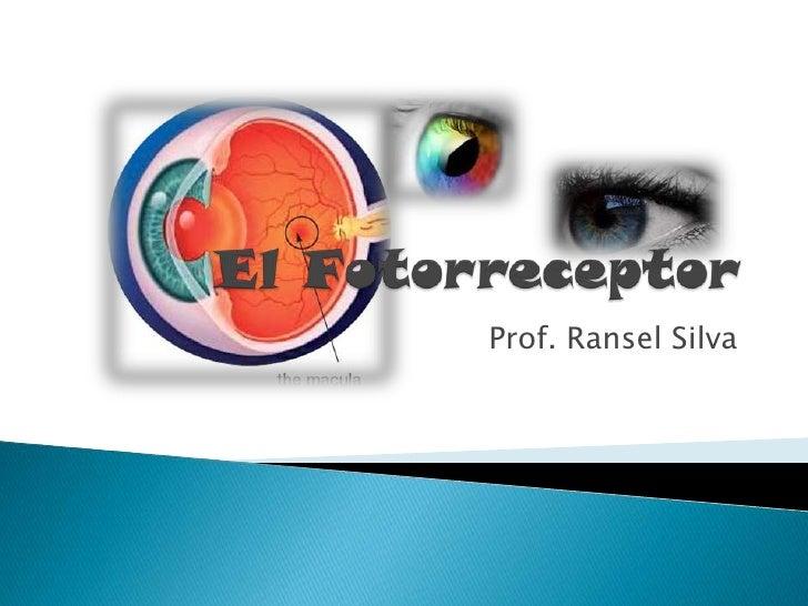 El Fotorreceptor<br />Prof. Ransel Silva<br />