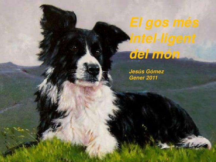 El gos més intel·ligent del món<br />Jesús Gómez<br />Gener 2011<br />