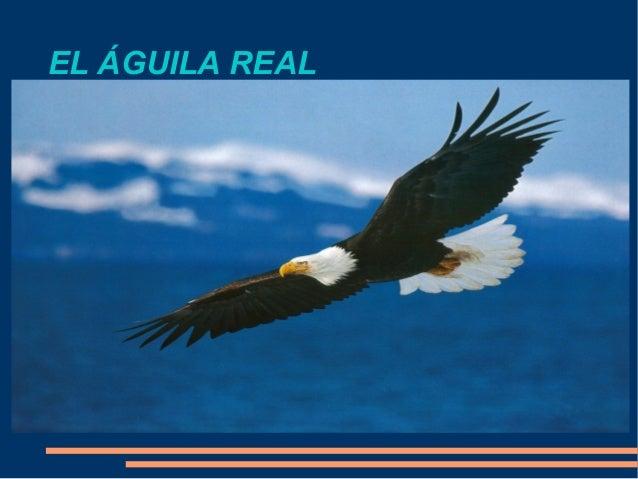 EL ÁGUILA REAL
