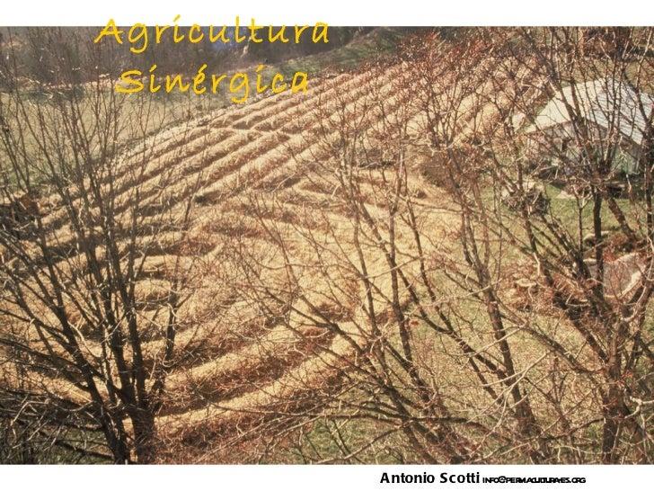 Agricultura Sinérgica Antonio Scotti  info@permacultura-es.org