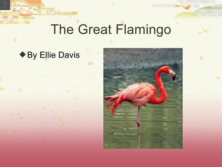 The Great Flamingo By Ellie Davis