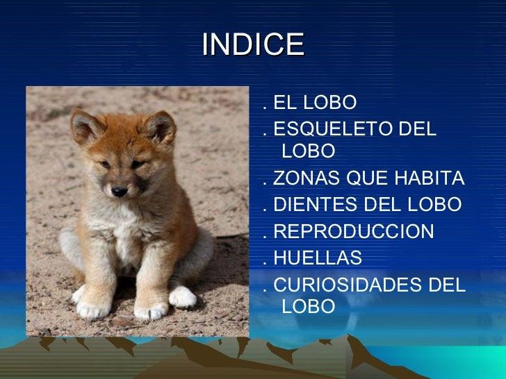 El lobo en asturias