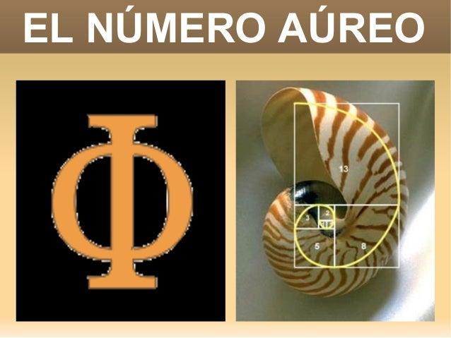 El numero aureo. Miguel Vázquez Caraballo. buscar