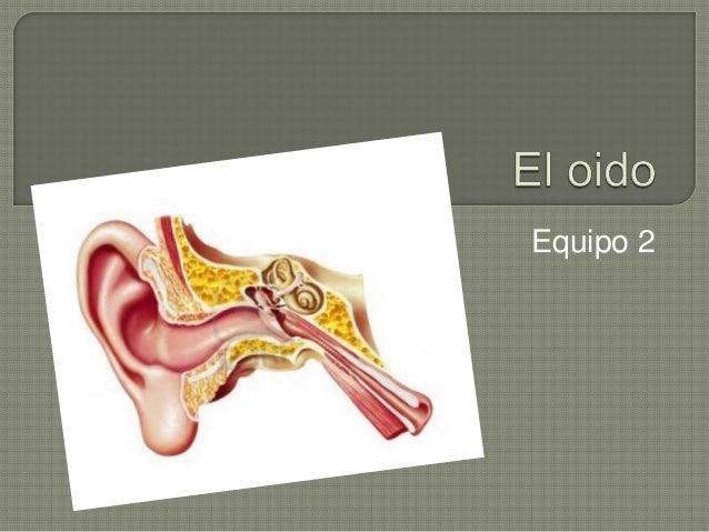 El oido