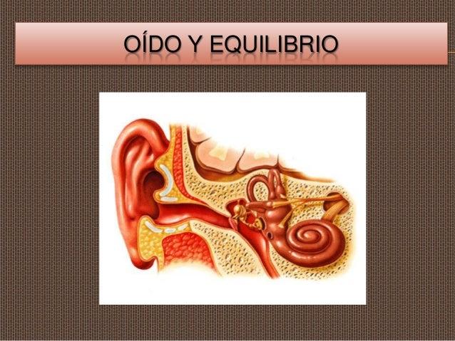 OÍDO Y EQUILIBRIO