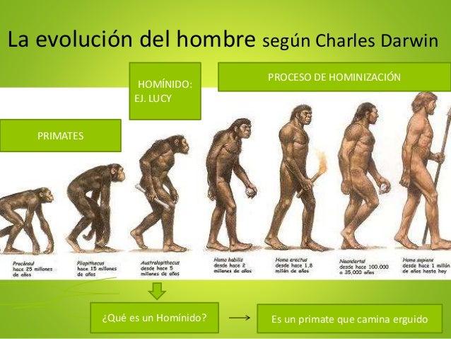Teoria de Darwin Evolucion Del Hombre la Evolución Del Hombre Según