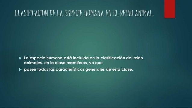 CLASIFICACION DE LA ESPECIE HUMANA EN EL REINO ANIMAL.   La especie humana está incluida en la clasificación del reino  a...