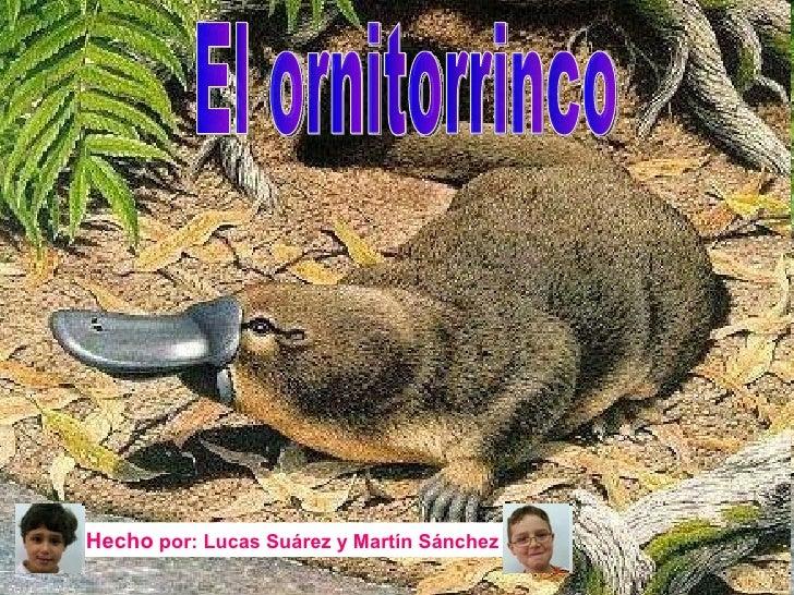 El ornitorrinco Hecho  por: Lucas Suárez y Martín Sánchez