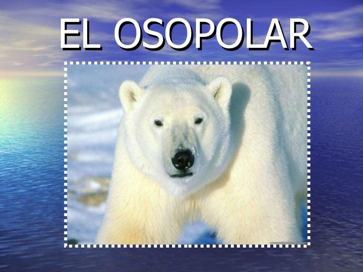 EL OSOPOLAR